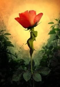 bimbóból rózsa lesz...